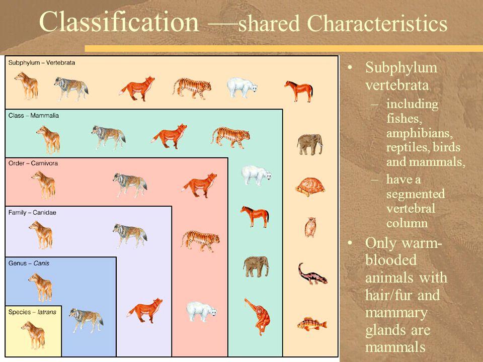 Classification —shared Characteristics