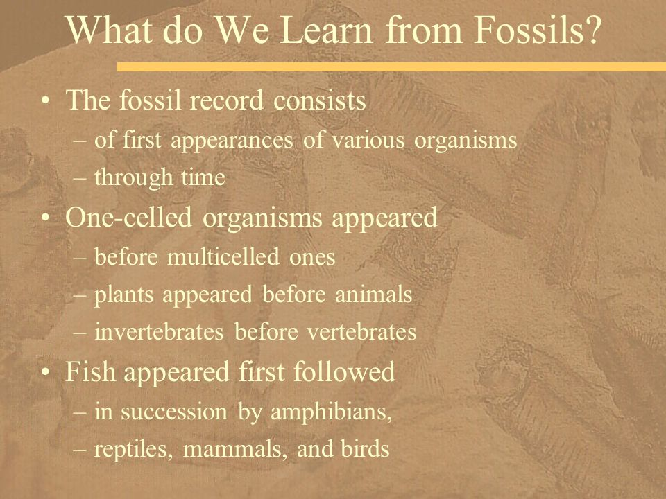 What do We Learn from Fossils