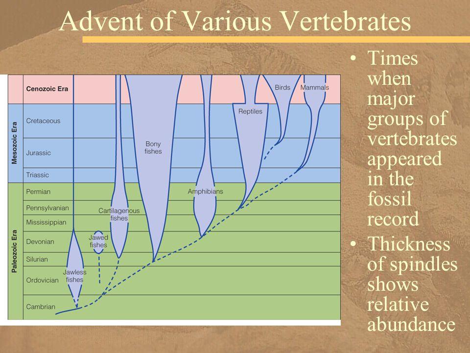 Advent of Various Vertebrates