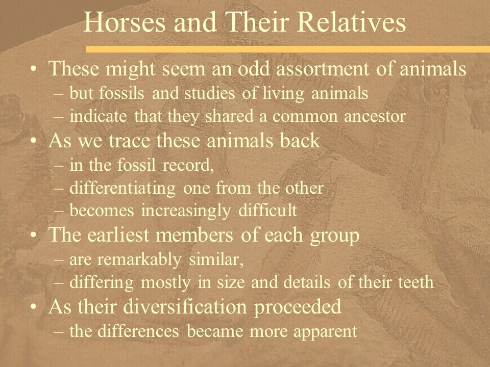 Horses and Their Relatives