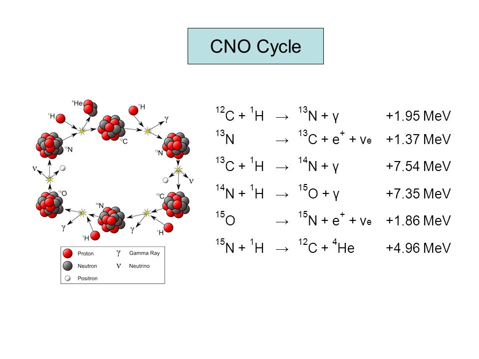 CNO Cycle 12C + 1H → 13N + γ +1.95 MeV 13N 13C + e+ + νe +1.37 MeV