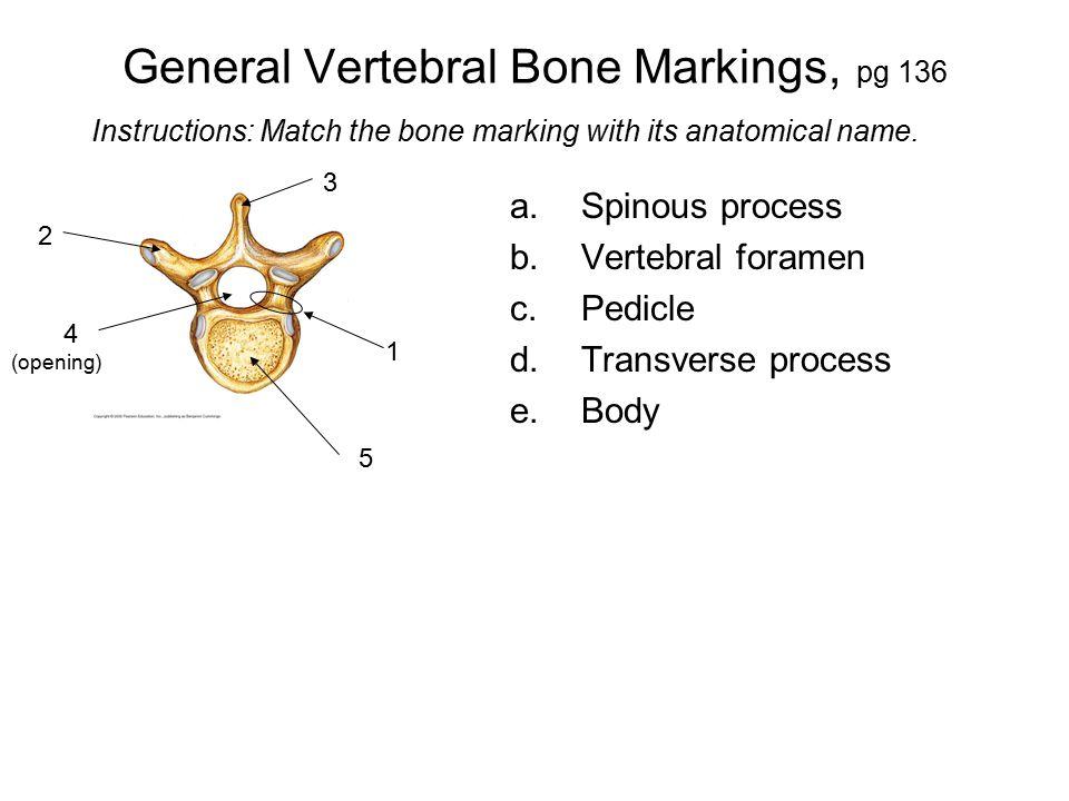 General Vertebral Bone Markings, pg 136