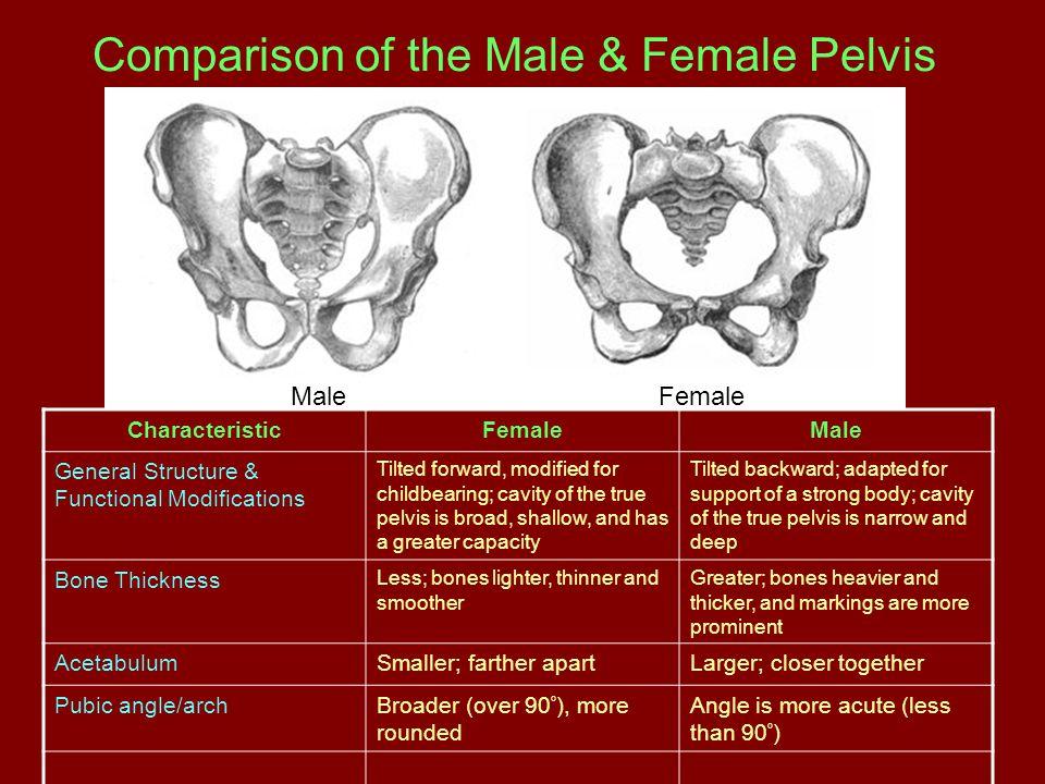 Comparison of the Male & Female Pelvis