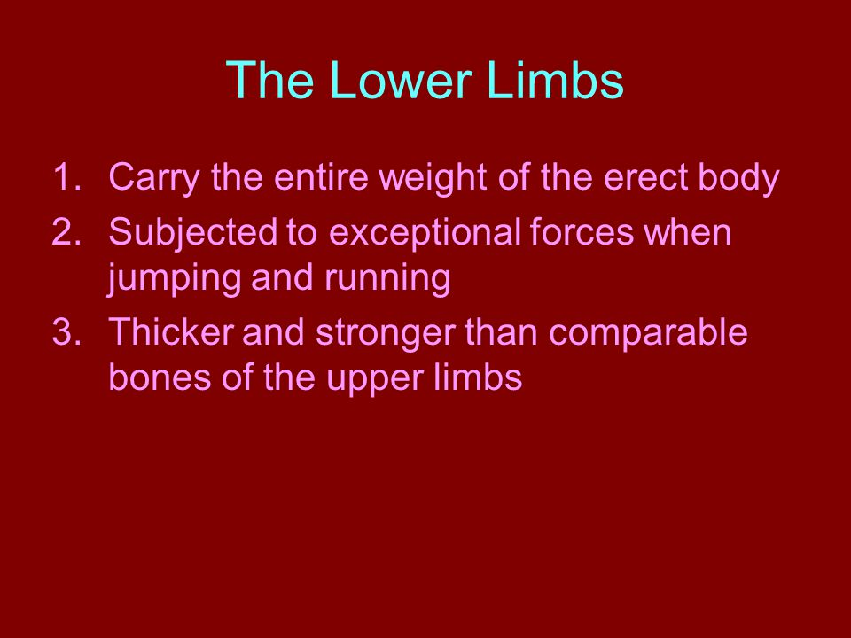 The Lower Limbs Carry the entire weight of the erect body
