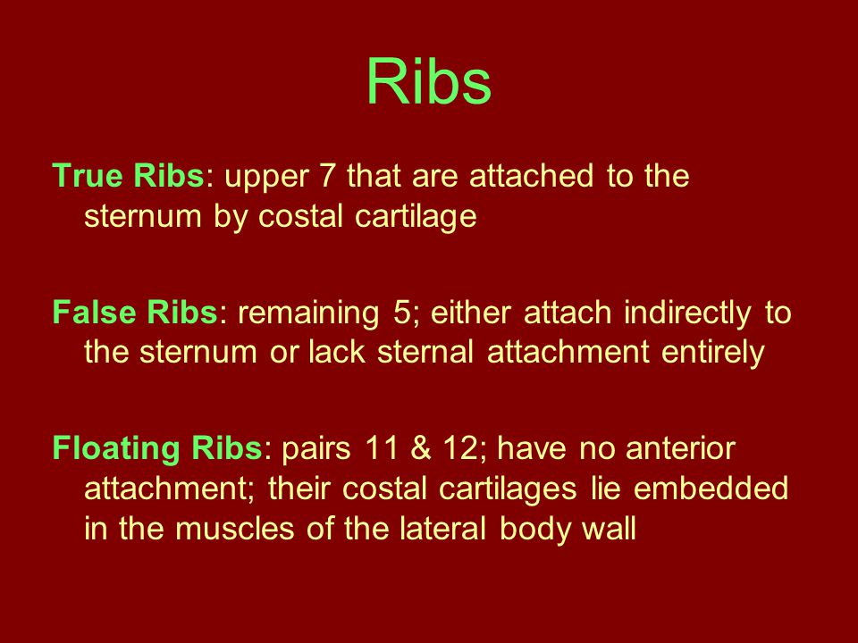 Ribs True Ribs: upper 7 that are attached to the sternum by costal cartilage.