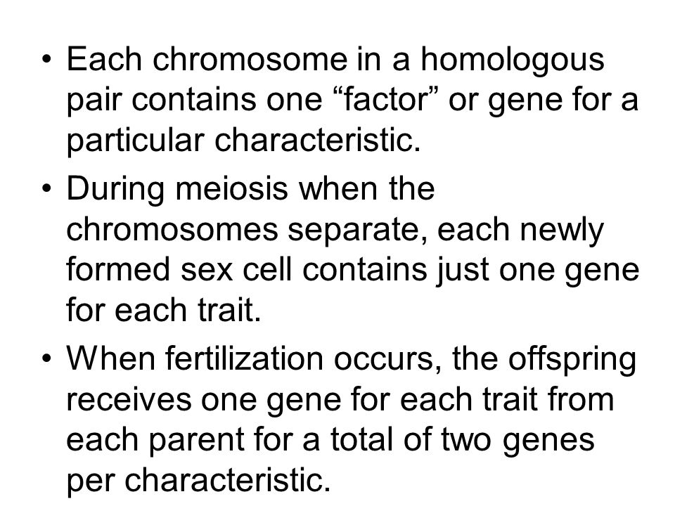 Each chromosome in a homologous pair contains one factor or gene for a particular characteristic.