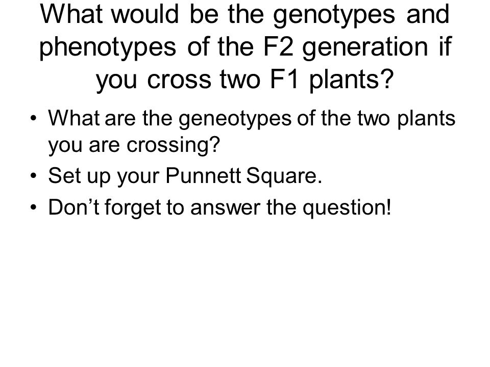 What would be the genotypes and phenotypes of the F2 generation if you cross two F1 plants