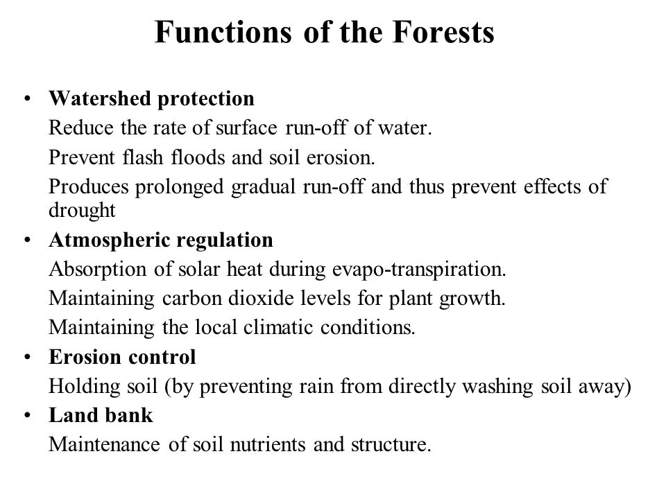 Functions of the Forests