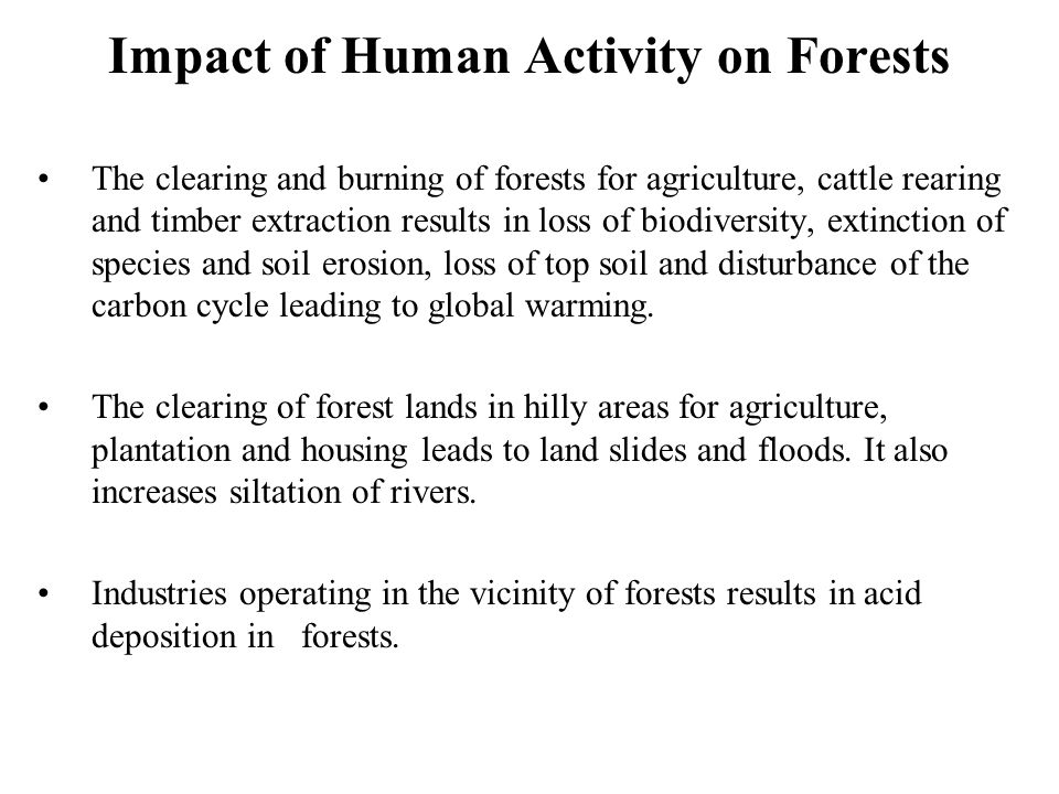 Impact of Human Activity on Forests