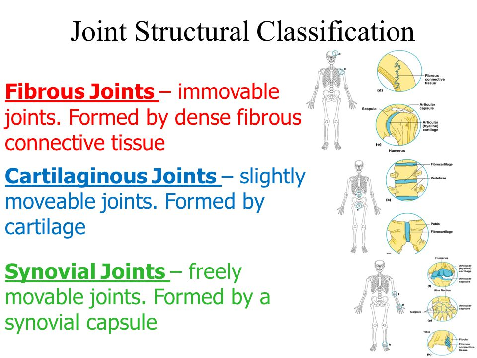 Joint Structural Classification