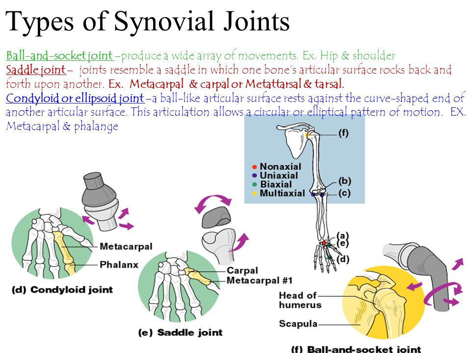 Types of Synovial Joints