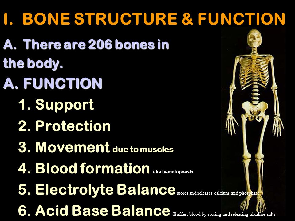 I. BONE STRUCTURE & FUNCTION
