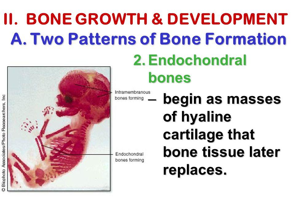 II. BONE GROWTH & DEVELOPMENT