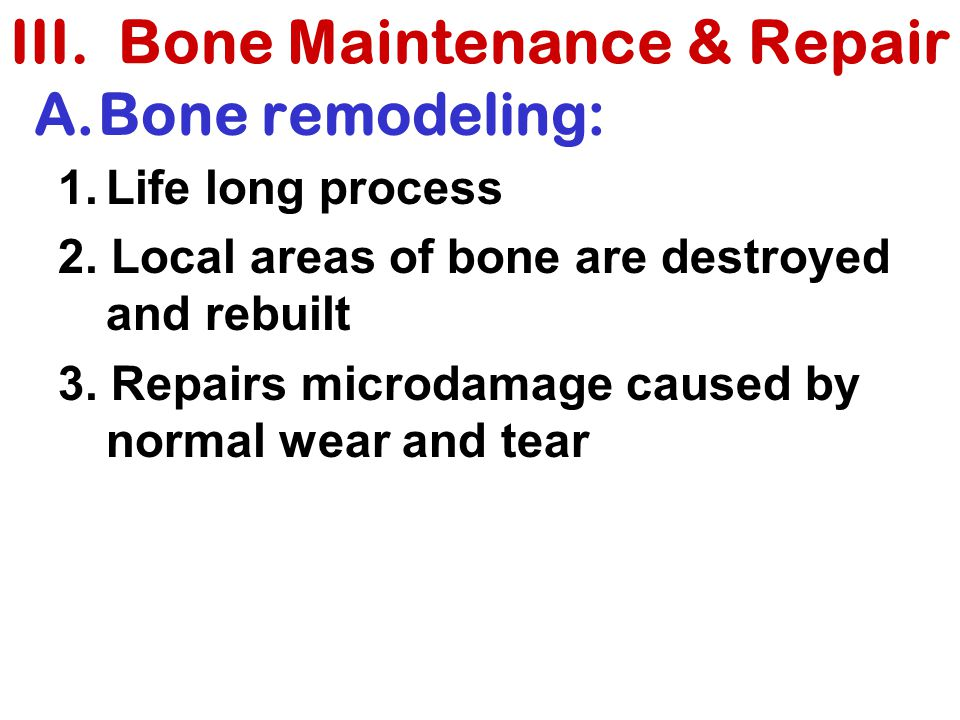 III. Bone Maintenance & Repair
