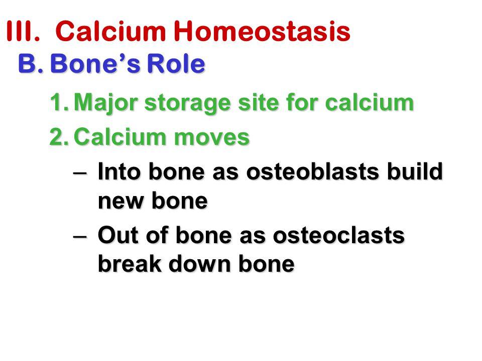 III. Calcium Homeostasis