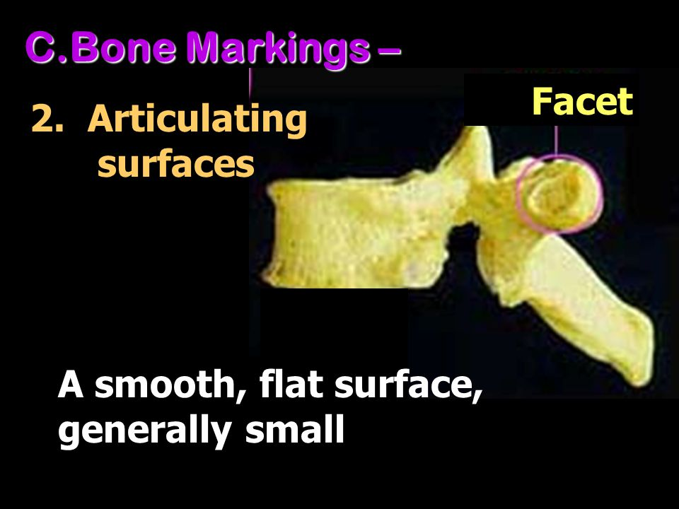 Bone Markings – Facet 2. Articulating surfaces