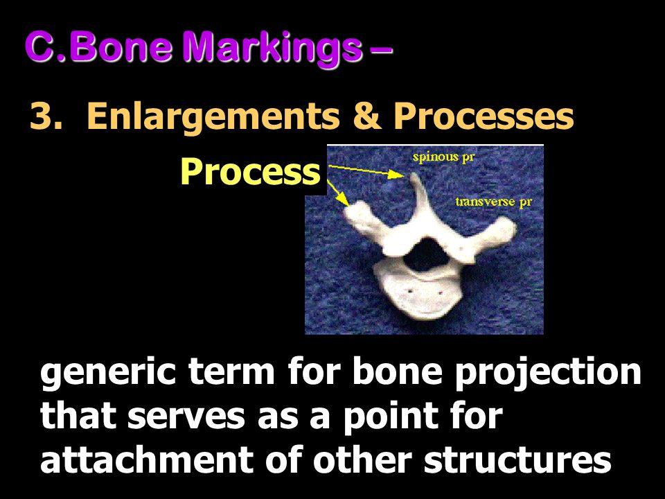 Bone Markings – 3. Enlargements & Processes Process