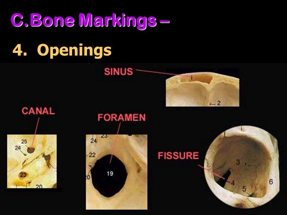 Bone Markings – 4. Openings
