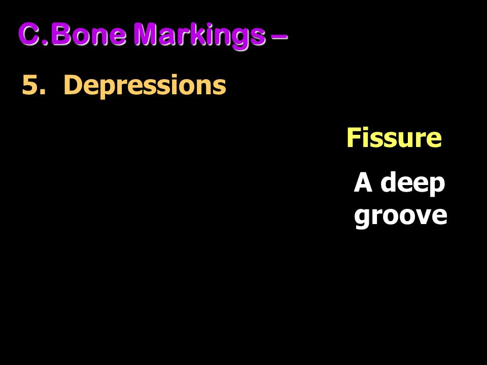 Bone Markings – 5. Depressions Fissure A deep groove