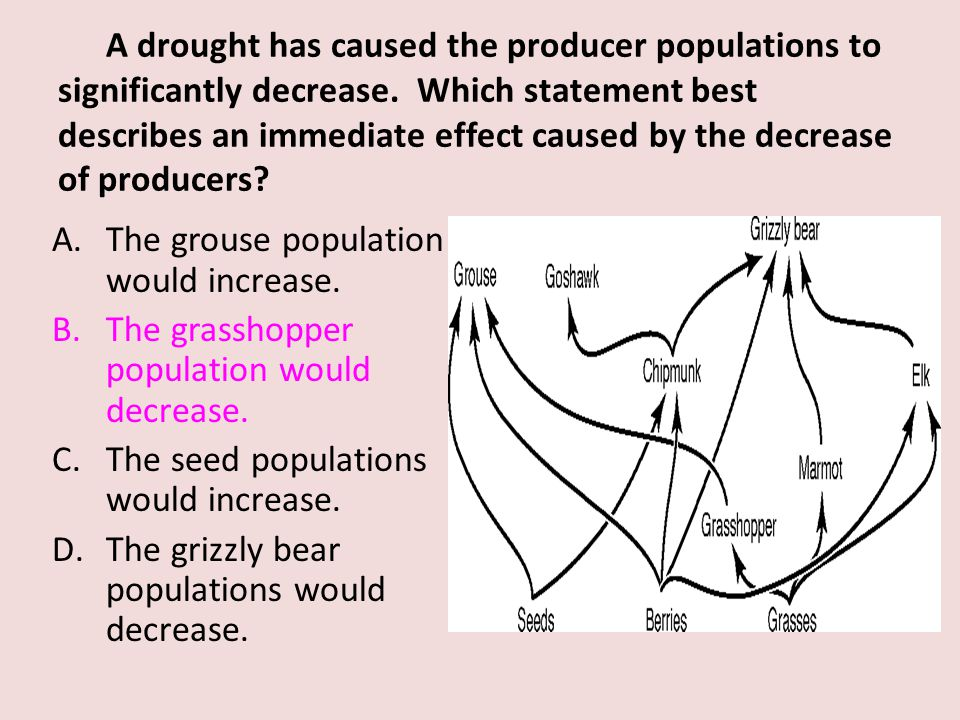 A drought has caused the producer populations to significantly decrease. Which statement best describes an immediate effect caused by the decrease of producers