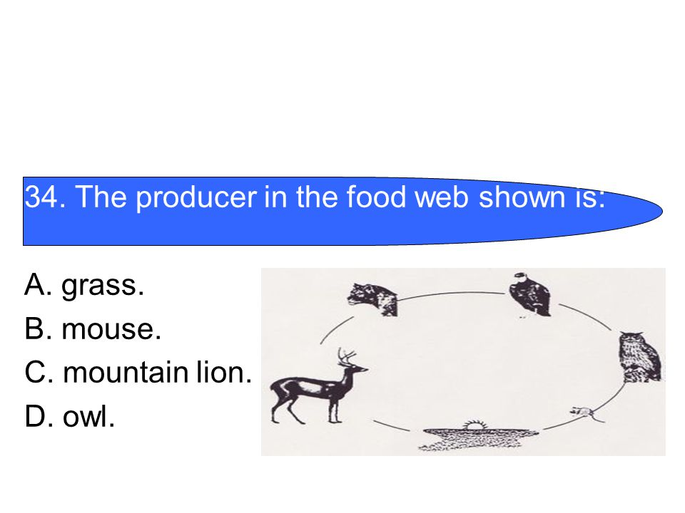 34. The producer in the food web shown is: