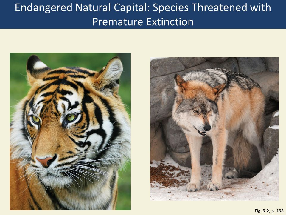 Endangered Natural Capital: Species Threatened with Premature Extinction