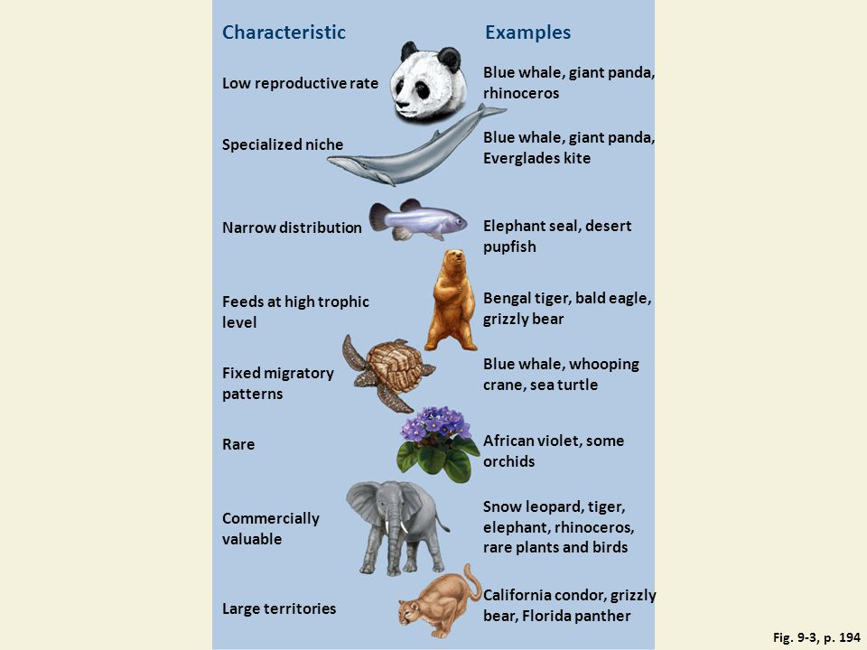 Characteristic Examples Blue whale, giant panda, rhinoceros