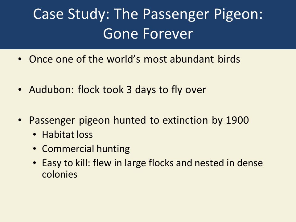 Case Study: The Passenger Pigeon: Gone Forever