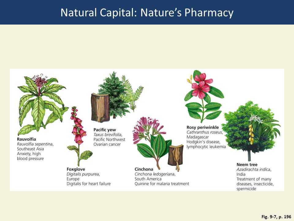 Natural Capital: Nature's Pharmacy