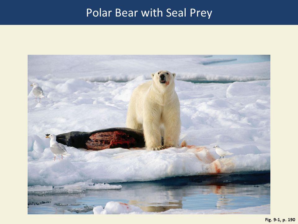 Polar Bear with Seal Prey