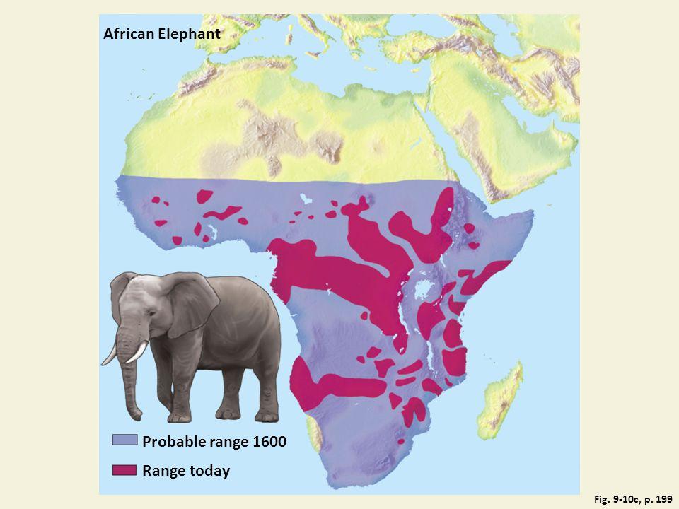 African Elephant Probable range 1600 Range today