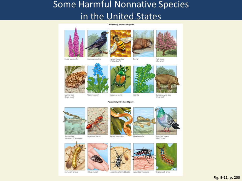 Some Harmful Nonnative Species in the United States