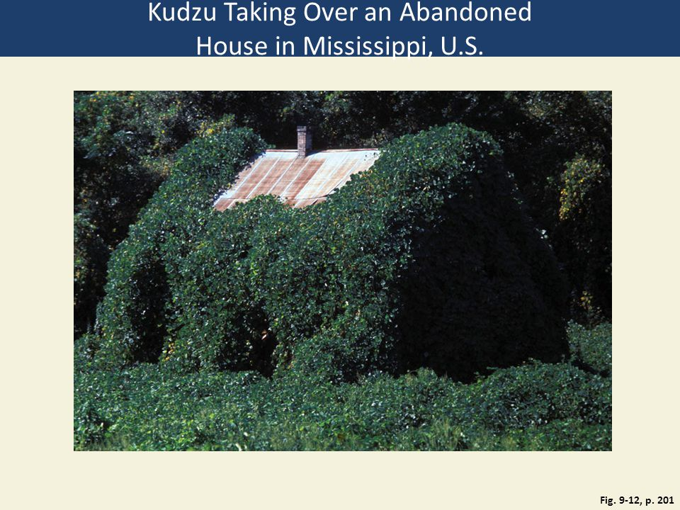 Kudzu Taking Over an Abandoned House in Mississippi, U.S.