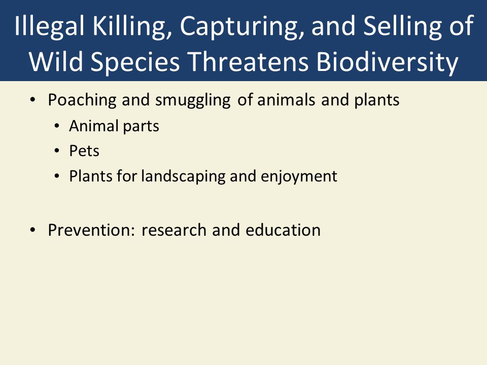 Illegal Killing, Capturing, and Selling of Wild Species Threatens Biodiversity