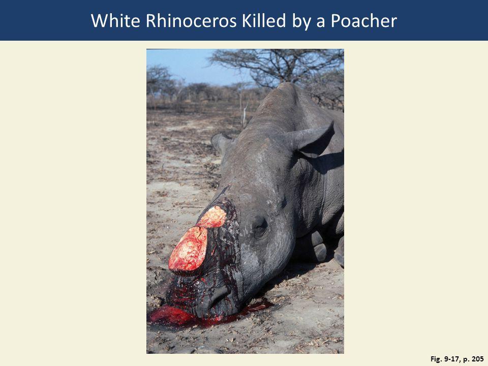 White Rhinoceros Killed by a Poacher