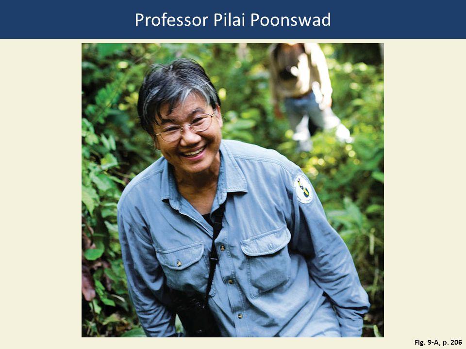 Professor Pilai Poonswad