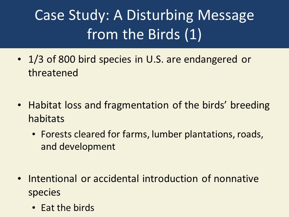 Case Study: A Disturbing Message from the Birds (1)