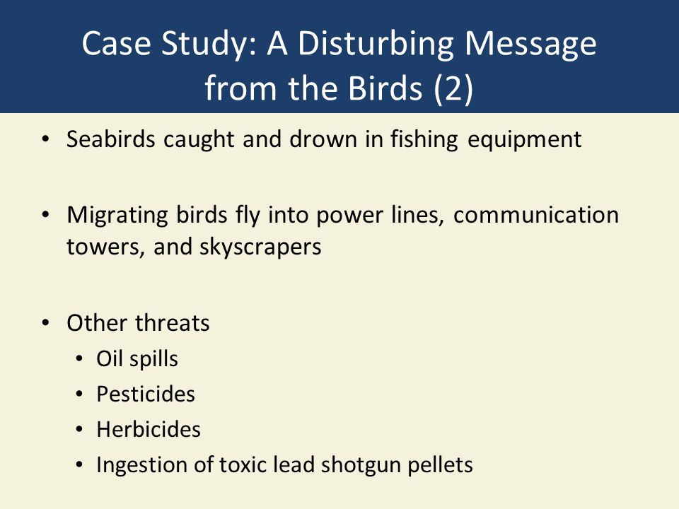 Case Study: A Disturbing Message from the Birds (2)