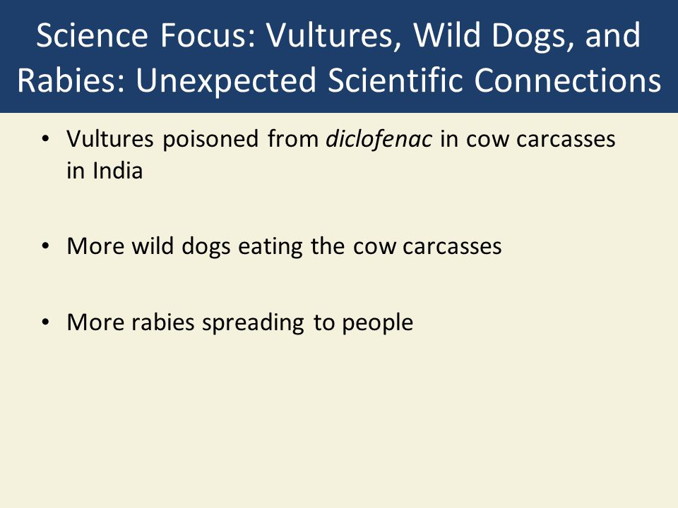 Science Focus: Vultures, Wild Dogs, and Rabies: Unexpected Scientific Connections