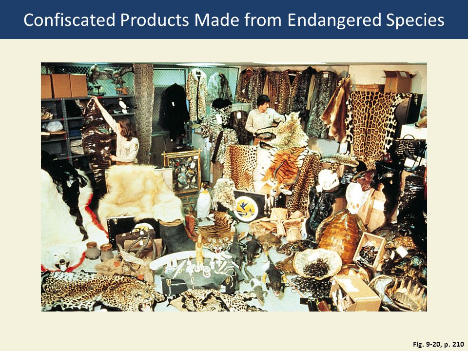 Confiscated Products Made from Endangered Species