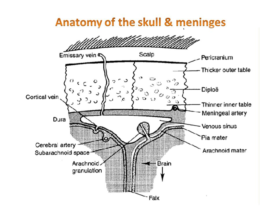 Anatomy of the skull & meninges