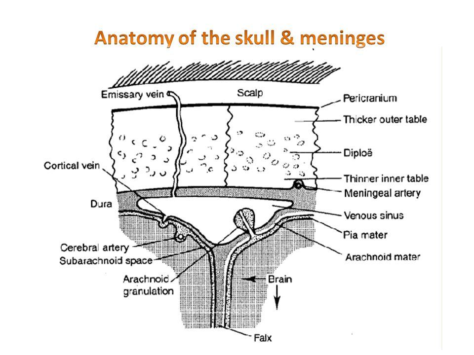 Anatomy of the skull & meninges