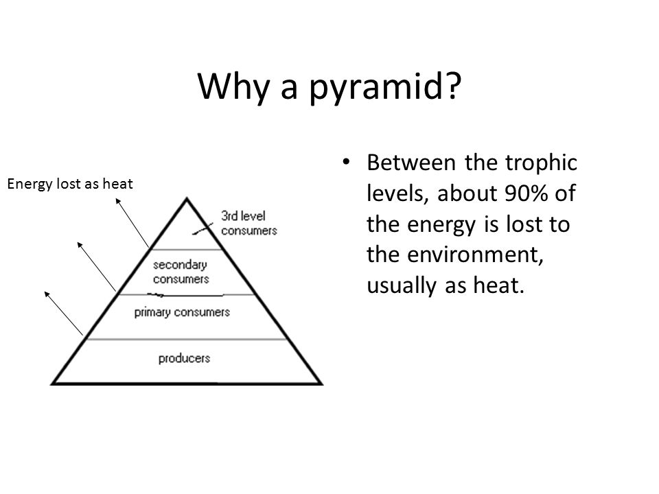 Why a pyramid Between the trophic levels, about 90% of the energy is lost to the environment, usually as heat.