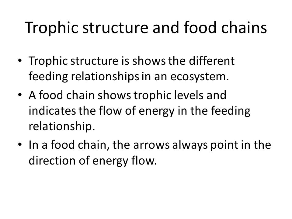 Trophic structure and food chains