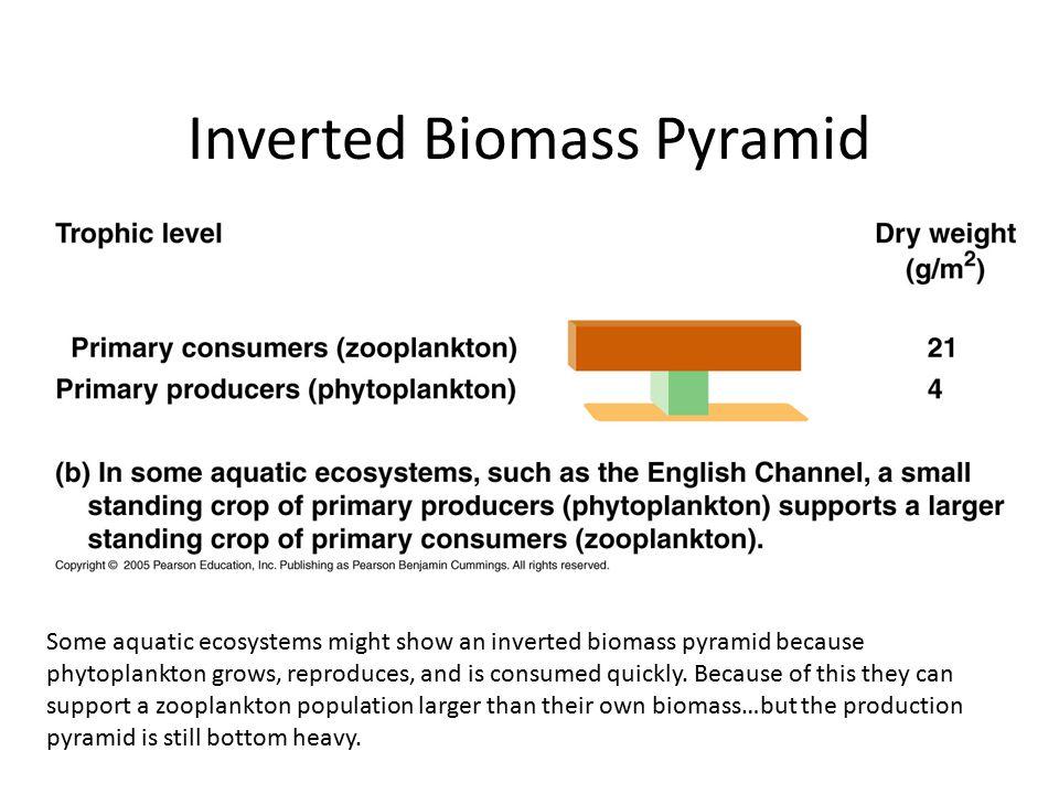 Inverted Biomass Pyramid