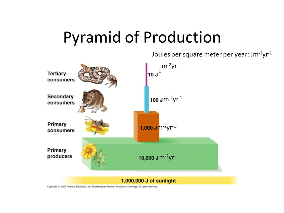 Pyramid of Production Joules per square meter per year: Jm-2yr-1