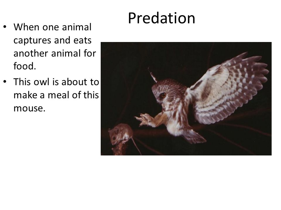 Predation When one animal captures and eats another animal for food.
