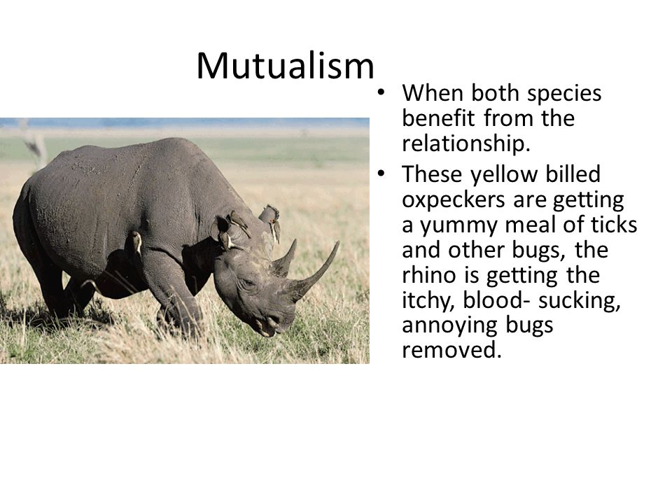 Mutualism When both species benefit from the relationship.