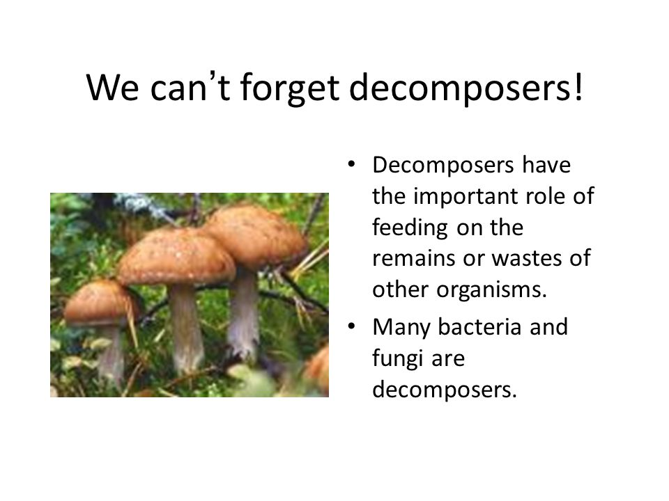 We can't forget decomposers!