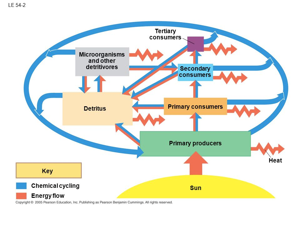 Tertiary consumers Microorganisms and other detritivores Secondary